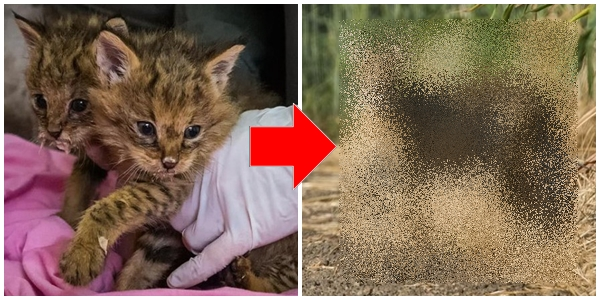 捨て猫だと思って保護したら、実はとんでもない生き物だった。正体はまさかの…