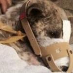 クズすぎる!口をテープでグルグル巻きにされた子犬が発見される…。