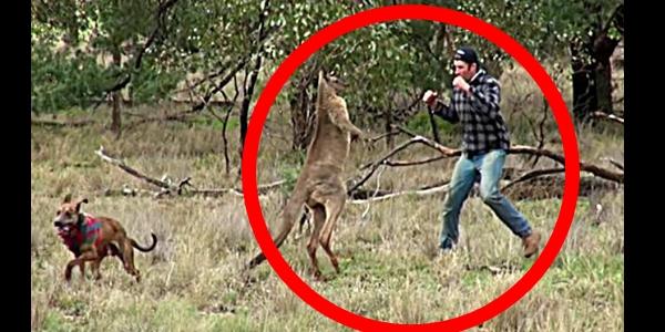 【マジキチ】カンガルーにパンチし犬を助けた男性、何故か大炎上してしまう…