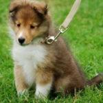 【感動】厳格な父が捨て犬に取った意外な行動に思わず涙…