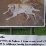【感動】迷子犬探しの張り紙?→違ったけど全米が感動…。その内容とは?